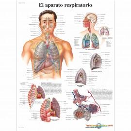 LÁMINA ENSEÑANZA INFECCIONES DEL TRACTO RESPIRATORIO